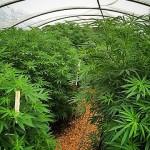 Garden of the Green Sun is Growing well!