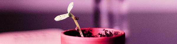 growing the peanut butter breath strain