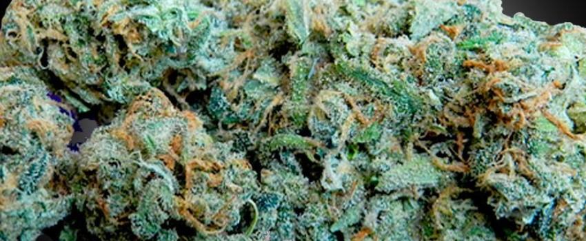 Blueberry Dream Medical