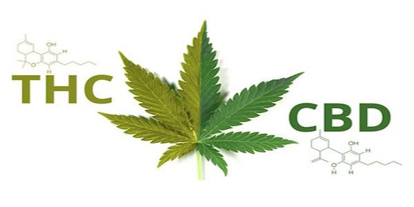Marijuana for social anxiety