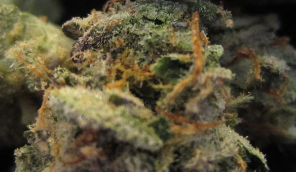 Cookies and Cream Strain Adverse Reaction
