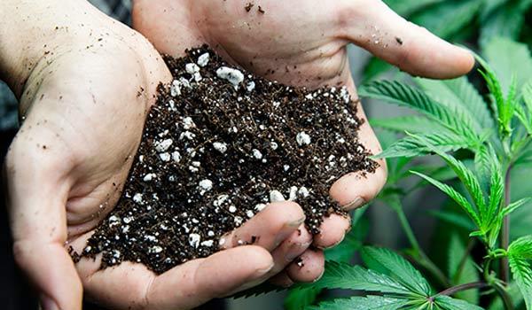 Cannabis soil problems