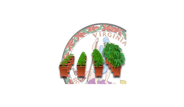 virginia cannabis growing