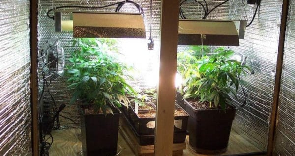 Controlling the Light Cycle for Indoor Grow Setups