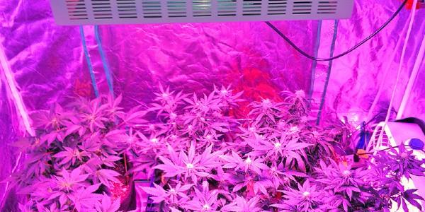More lights mean more heat - choose LED grow lights