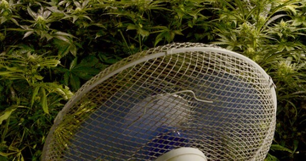 Increase the temperature while growing by using swivel fans