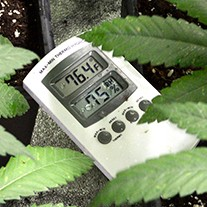 Marijuana plants need to be in the best climate when grown indoors