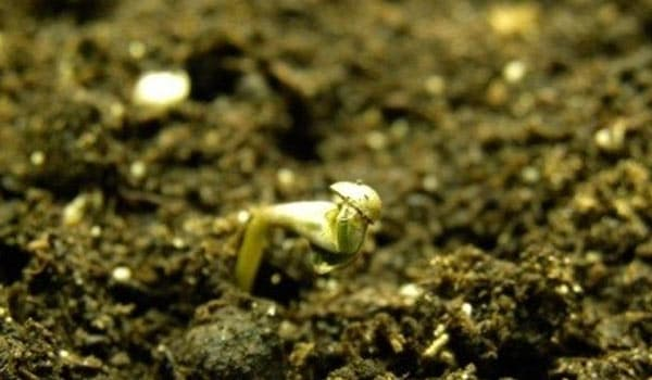 Directly in the Soil