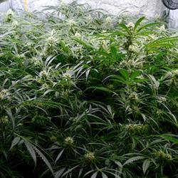 hydro flowering week 6 2