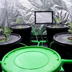 week 1 veg setup 3